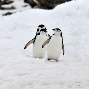 pinguin wandelweg
