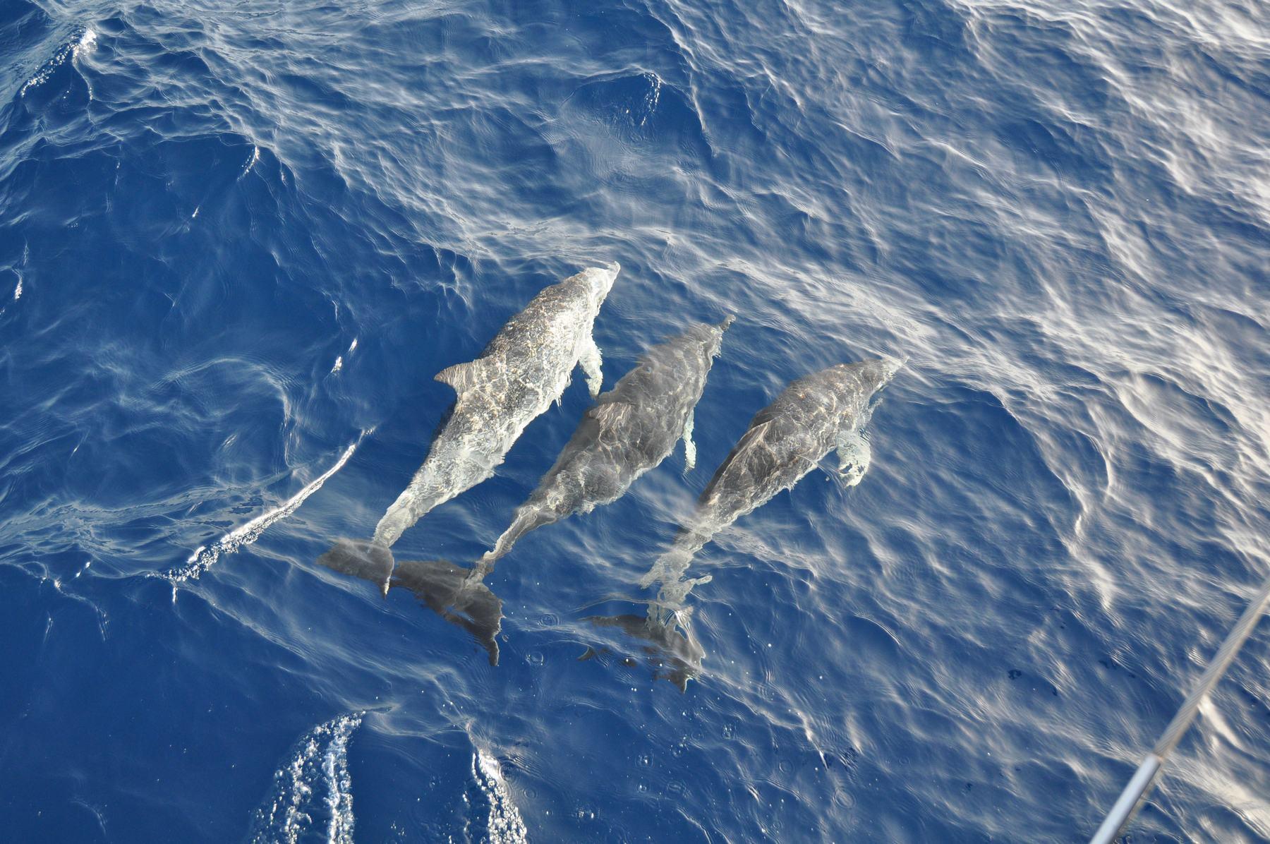 Voile vers les îles du Cap-Vert