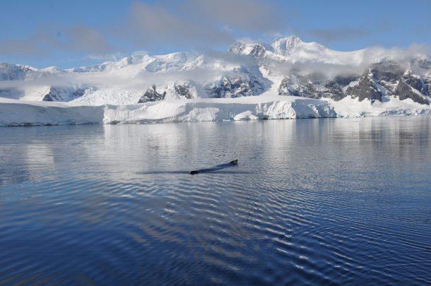Wale in der Antarktis neben dem Anne-Margaretha